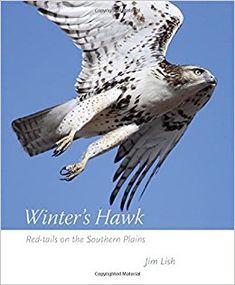 Hawk Koch