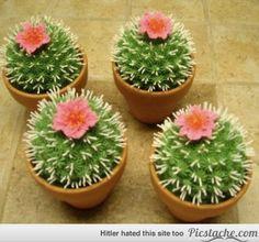 Cactus Mack