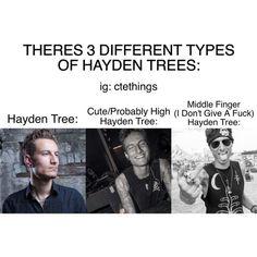 Hayden Tree
