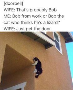 Dude The Cat