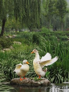 Jiang Weiping