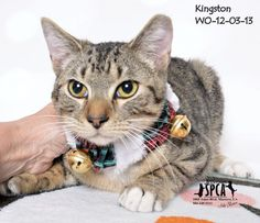 Kingston Foster