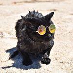 Nathan the Beach Cat